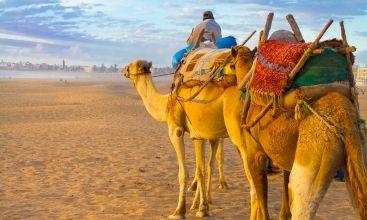 Alquiler de coches Agadir